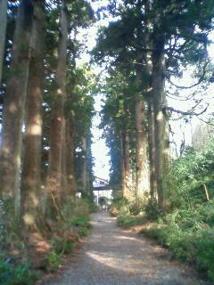 ザ箱根並木